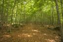 El bosc de Connangles